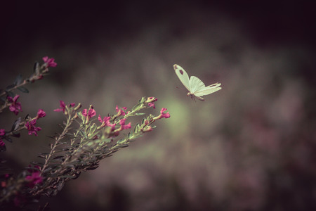 Close Up Of White Butterfly And Flowers On Blurred Green Background In Garden, Toned Color Stock Photo