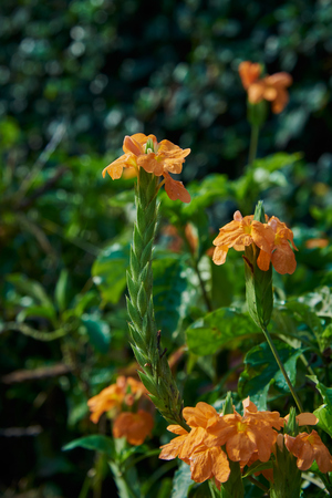 Orange Flowers In Park With Morning Sunlight