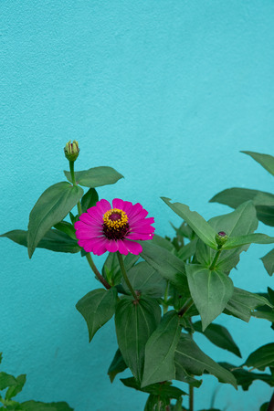 Beautiful Pink Flower And Gree Pastel Background Stok Fotoğraf