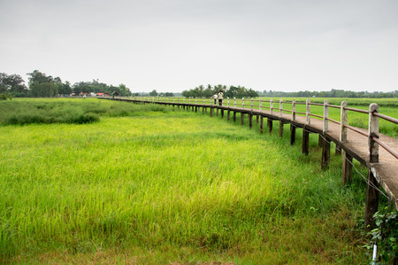 Countryside Landscape With Walkway Above Rice Field And Overcast Sky.