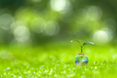 green world: ecology images