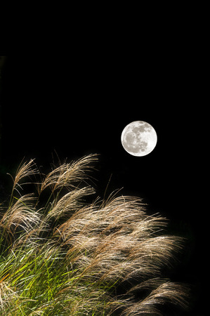 the pampas: Japanese pampas grass and a full moon Stock Photo