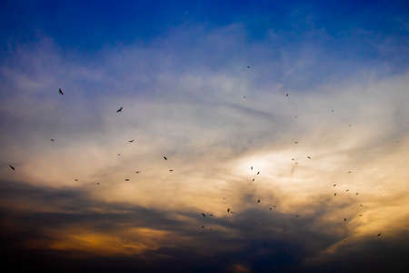 Birds in the evening sky