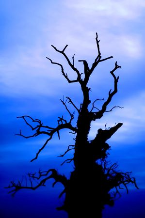 bewitched: scary tree on the deep blue sky background - blurred branches to increase the spooky effect