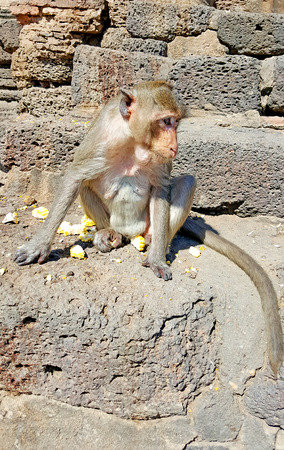 sitting on the ground: Monkey sitting on the ground at temple in Thailand Stock Photo