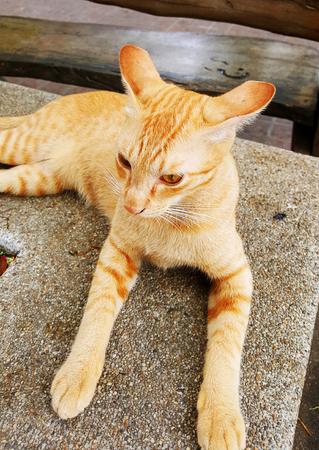 sitting on the ground: Cat sitting on the ground