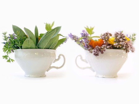 two cups of herbs photo