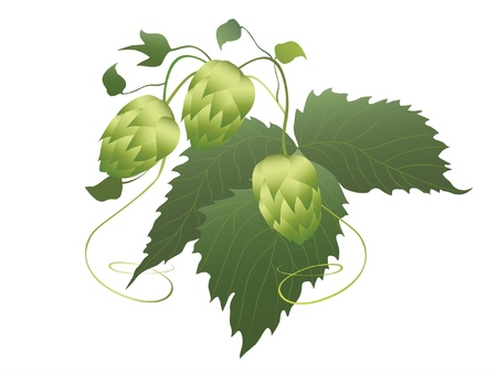 brouwerij: hop-plant