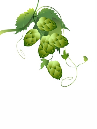 hops plant Stock Vector - 9312341