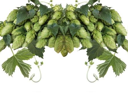 hops Stock Photo - 9312356
