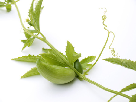 Achocha Vegetable