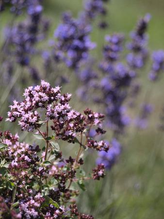 Home Herbal Garden
