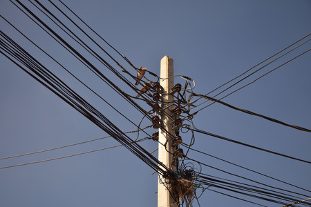 nests: Nests on electric poles