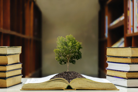 Education is very important for everyone, the book is turned out, there is a soil on it, Increase intelligence, the Big tree is growing. Stock fotó
