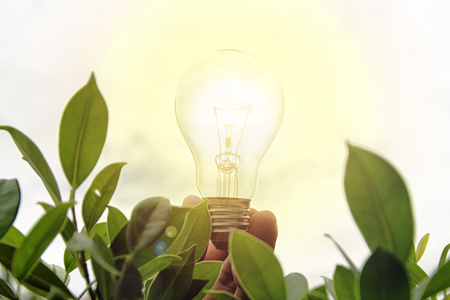 Energy-saving concept. A man hold light bulb in the midst of nature, green wood. Lighting is a necessity for living. Stock Photo