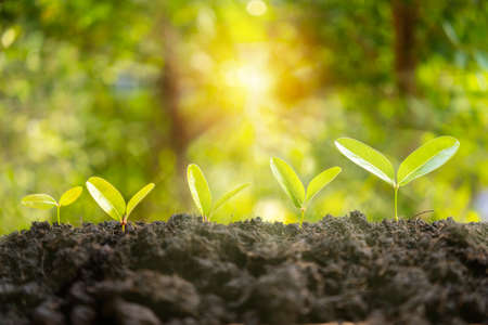 Little green seedlings growing in soil against blurred background. Grow business - financial and investment concepts