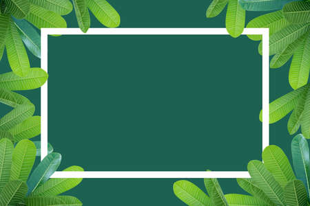 Frangipani leaves above and below are spaces in the middle of a separate pastel green background. White polygonal color frame