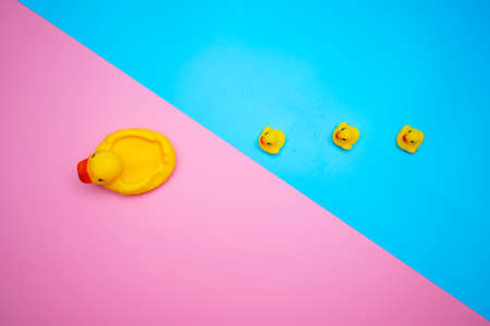The concept of a smooth follow-up, rubber ducks manage to line up on a blue background and have crossed over on pink.