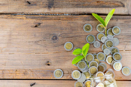 money saving and investing for business investment finance and banking concept. green plant leaves growth on row of coin stack on wood table