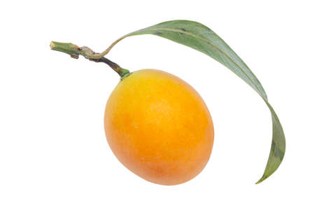 sweet Marian plum thai fruit isolated on white background (Mayongchid Maprang Marian Plum and Plum Mango,Thailand) 版權商用圖片