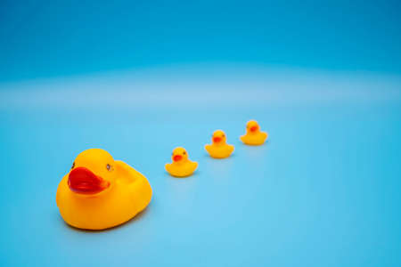 The concept of a smooth follow-up, rubber ducks manage to line up on a blue background 版權商用圖片 - 168300220