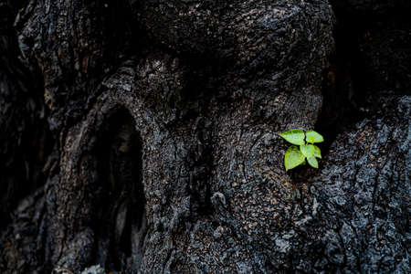 young seedling sprout on cut log, natural fresh green spring background. Hope strong concept