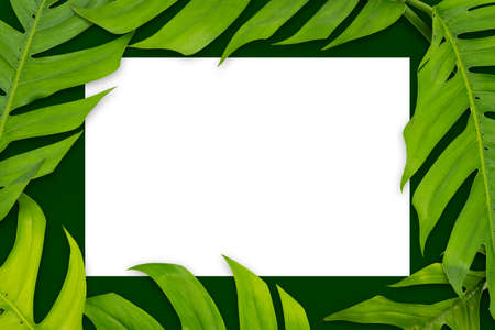Blank card and fresh mint leaves on white background. Tropical leaves Monstera on green background. Flat lay, top view Stock Photo