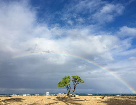 After rain a beautiful rainbow above a single green tree in a beach
