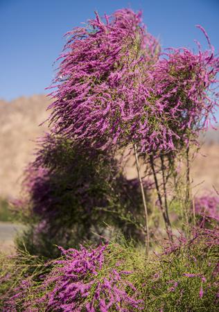 tiny: Tiny purple flowers