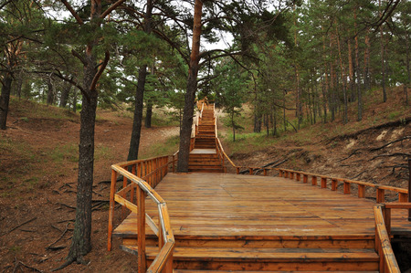 pinus sylvestris: Pinus sylvestris Stock Photo