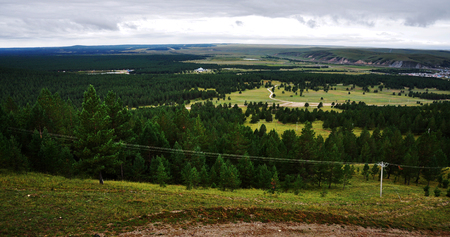 pinus sylvestris: forest district