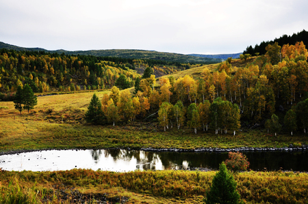 grassland: grassland Landscape Stock Photo