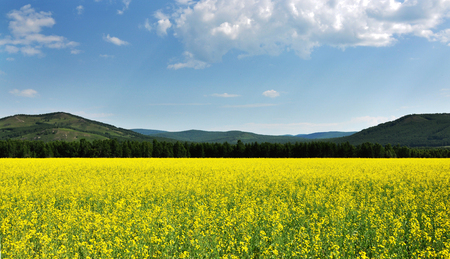 Nature landscape scenery view of grassland