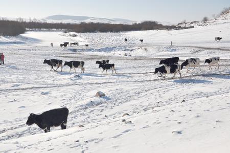 Hulun Buir winter Scenery Stock Photo