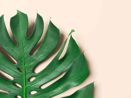 Green palm leaf with pink background. Nature and Fashion concept. 3d rendering - illustration.