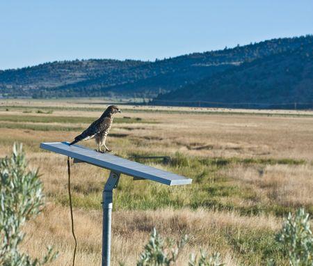 hawk on solar panel Stock Photo
