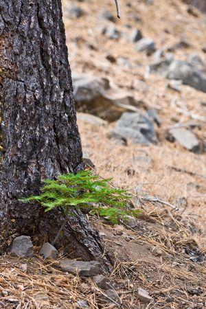 new growth Stock Photo - 3628844