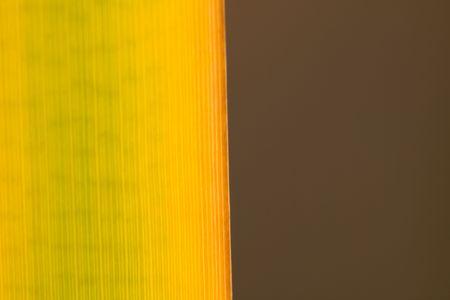fall abstract Stock Photo - 3659202