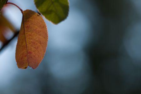 fall abstract Stock Photo - 3659203