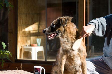 dog grooming Stock Photo