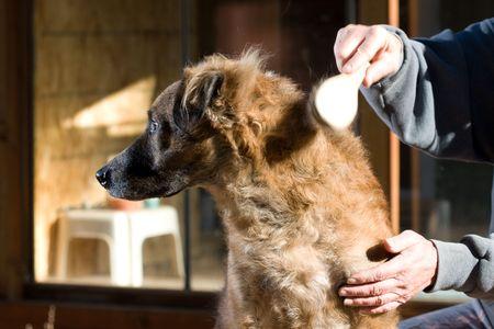 dog grooming Stock Photo - 3672378
