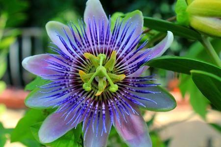 Egy nagyon szép, egzotikus virág