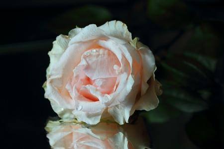 Birthday end beautiful   rose