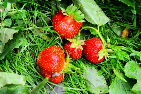 subtly: Some strawberries on the grass Stock Photo