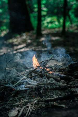 Flaming Campfire in the green forest