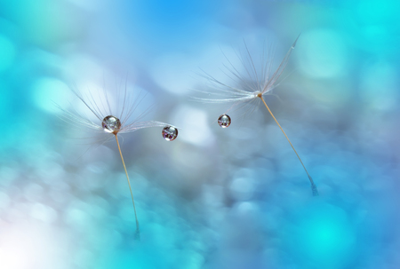 waterdrops: Dandelions with Waterdrops on Blue Background.. Stock Photo
