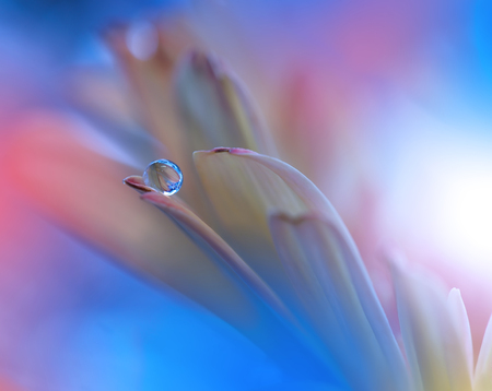 waterdrop: Flower with Waterdrop on Blue Colorful Background... Stock Photo