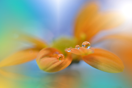waterdrops: Flower with Waterdrops on  Colorful Background...