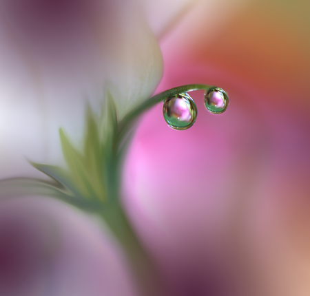 Abstract macro photo with water drops.Artistic Background for desktop. Flowers made with pastel tones.Tranquil abstract closeup art photography.Print for Wallpaper...Floral fantasy design...