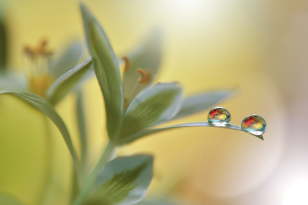 Gentle romantic artistic image. Soft pastel background blur .Reflection of the flower in the dew drop.Shallow depth of field.Modern art.Close up.